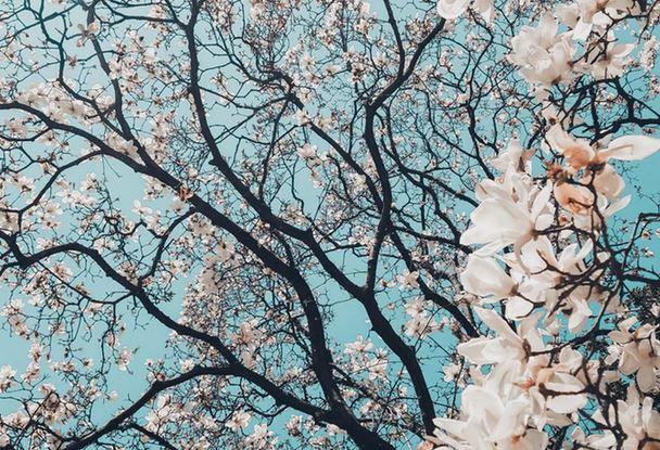 10 Frühlingsaktivitäten: Die besten Freizeit-Tipps für den Frühling